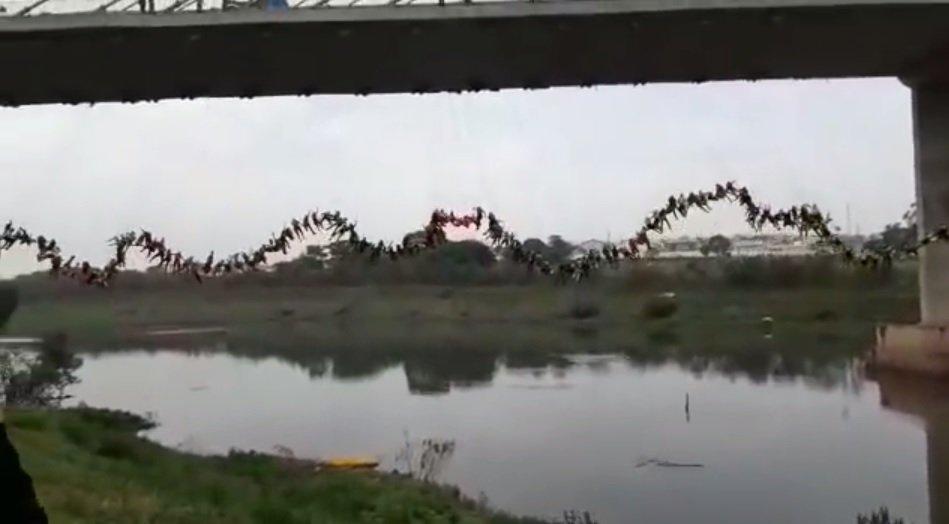 Самый массовый прыжок бейсджамперов