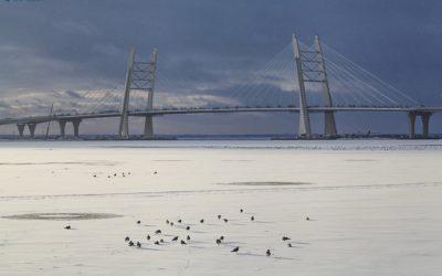 Бейсджамперы спрыгнули с Вантового моста на ЗСД в Петербурге