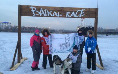 Гонка на собачьих упряжках «Baikal Race – 2019» состоялась в Иркутске
